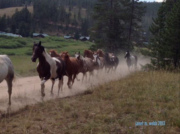 Horses on their way to pasture in the afternoon