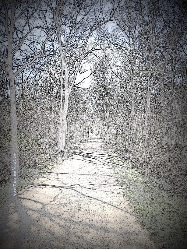 Our path, turned into a pencil sketch courtesy of Picasa 3