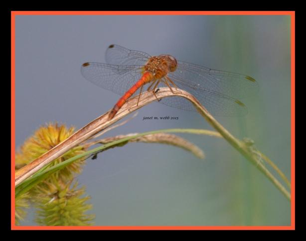 dragonfly janet m. webb 2015