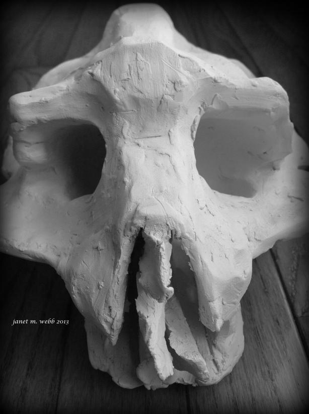 skull copyright janet m. webb 2013