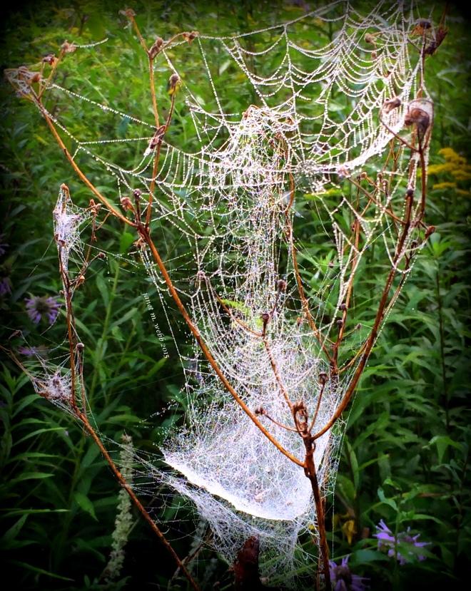 spider webb copyright janet m. webb 2015