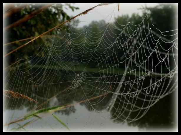 spider web copyright janet m. webb 2015