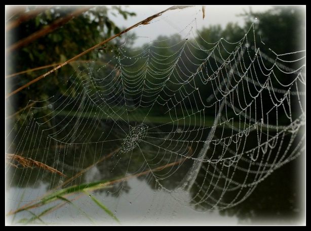 spider web copyright janet m. webb 2015