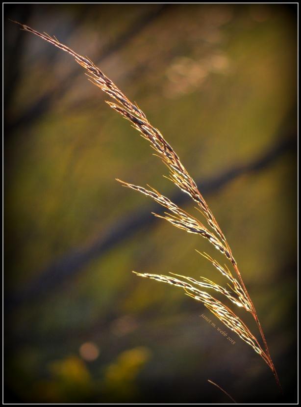 grass copyright janet m. webb 2015
