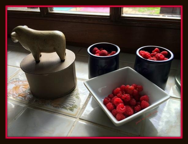 raspberries copyright janet m. webb 2014